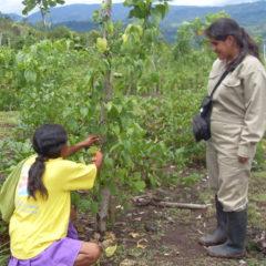 Sacha Inchik Sozialprojekt