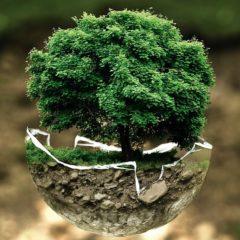 Sacha Inchik und Ökologie